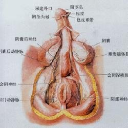 生殖器官  免费编辑   添加义项名