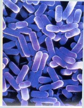 细菌芽胞手绘图片