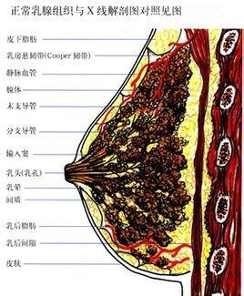 乳腺疾病  免费编辑   添加义项名