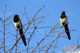 写动物叫声的词语_有些动物发情时发出叫声,因多在春季,所以称叫春,亦称嚎春.