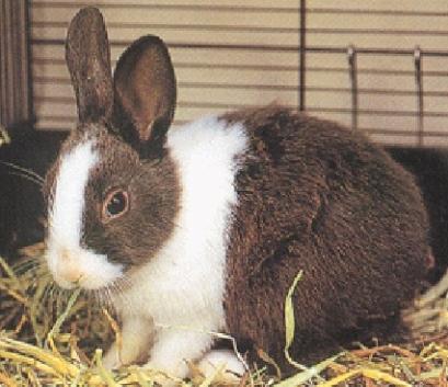 壁纸 动物 兔子 409_353