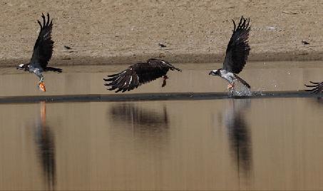 动物 鸟 鸟类 453