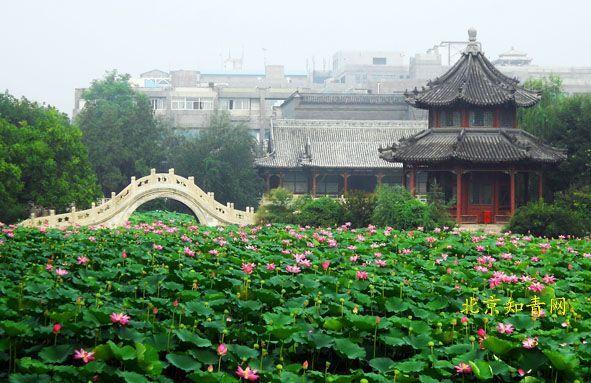 """古莲花池,地处河北保定市内南市区,是保定八景之一,称""""涟漪夏艳""""."""