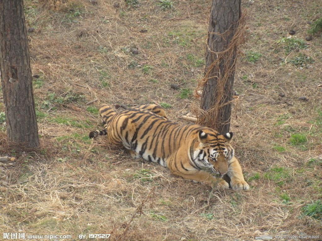 7·23北京野生动物园老虎伤人事件