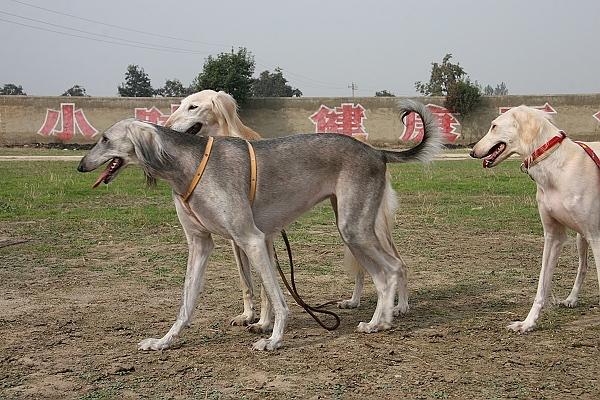 陕西最有名的动物