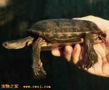壁纸 动物 龟 蜥 蜥蜴 380_316