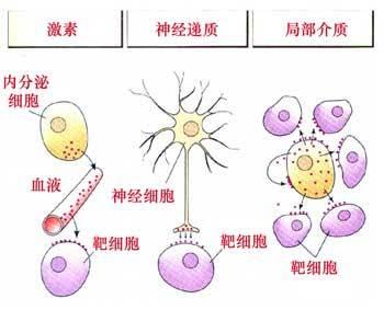 《分子与细胞》模块知识结构图