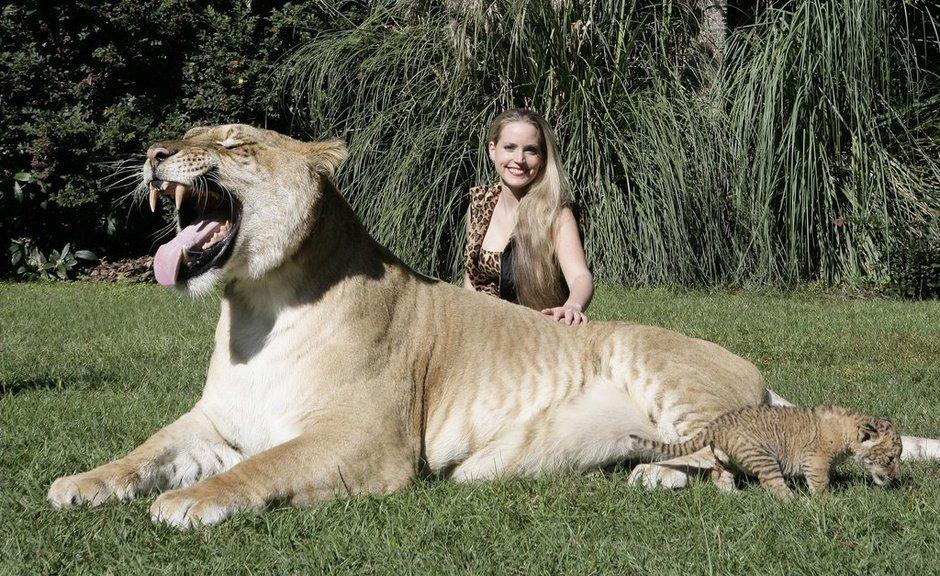 """动物保护组织公布了世界最大的""""混血猫""""兄弟的合照"""
