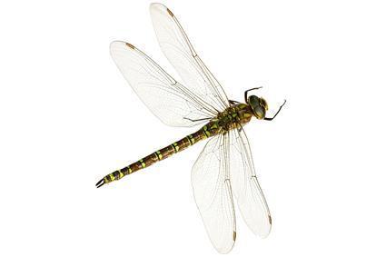 昆虫- 节肢动物门昆虫纲动物